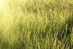 Fresh grass on meadow Royalty Free Stock Images