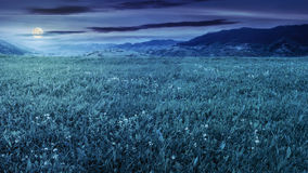 Fresh grass  meadow near the mountains at night Royalty Free Stock Photos