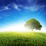 Fresh Grass Meadow and Tree Stock Images