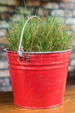 Fresh grass in metallic bucket. Fresh green grass growing in metallic red bucket on the table stock images