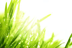Fresh grass and sunlight Stock Photos