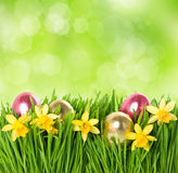 Fresh grass with narcissus flowers, easter eggs Stock Photo