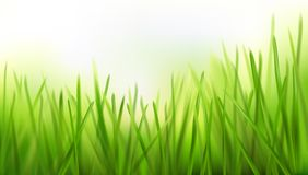Fresh grass - nature background. Vector illustration. Spring nature background with fresh grass. Green meadow. Vector illustration Royalty Free Stock Image