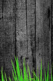 Fresh grass and old wooden background Stock Image