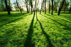 Fresh grass in a park Stock Photos