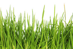 Fresh grass after a rain Stock Images