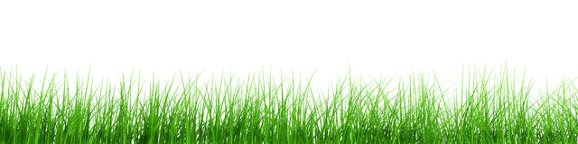 Fresh grass row Royalty Free Stock Photography
