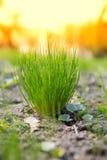 Fresh grass Stock Photos