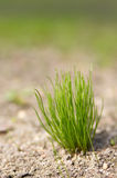 Fresh grass Stock Photography