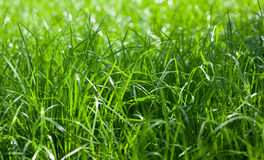 Fresh grass on spring time Royalty Free Stock Images