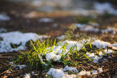 Fresh grass. Stock Image