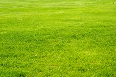 Fresh Grass Stock Photo Royalty Free Stock Image