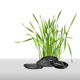 Fresh grass and stones Royalty Free Stock Images