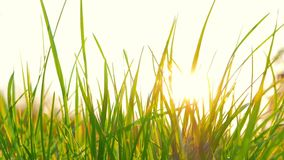 Fresh grass and the sun stock video footage