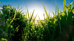 Fresh Grass with sunshine - Relaxation concept Stock Photography