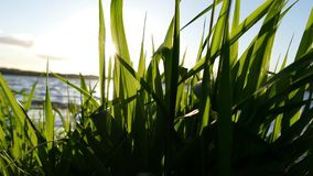 Fresh Grass with sunshine - Relaxation concept - 4K Stock Photos