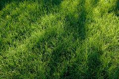 Fresh grass texture Royalty Free Stock Photography