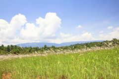 Fresh grass on top of a dyke in Khao Yai, thailand Stock Photography