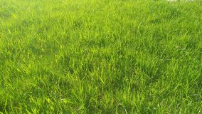 Free Fresh Grass Under The Rays Of The Spring Sun. Background. Stock Photos - 146073103