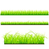 Fresh grass vector template vector illustration