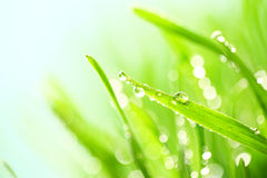 Fresh grass with water drops Royalty Free Stock Photos
