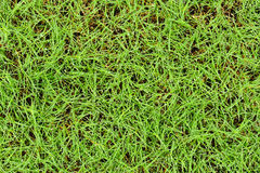 Fresh grass with water drops background.  Stock Images