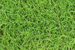 Fresh grass with water drops background.  Royalty Free Stock Images