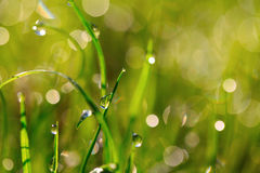 Fresh grass with water drops Royalty Free Stock Image