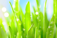 Fresh grass with water drops in sun rays