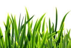 Fresh grass Stock Photo
