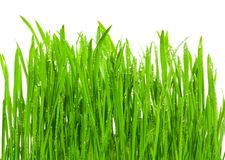 Free Fresh Grass With Dew Drops Royalty Free Stock Photos - 2133318