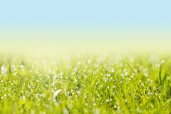 Fresh Grass With Dew Drops Stock Images