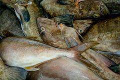 Fresh gray fish at the fish market Royalty Free Stock Image