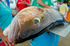Fresh gray fish at the fish market Royalty Free Stock Photography