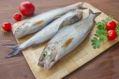 Fresh grayling, a family of salmon. Fresh fish on the table stock image