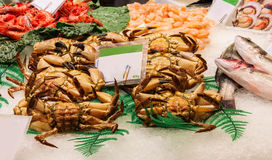 Fresh great crabs, shrimps and lobster at the market Stock Photography