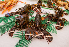Fresh great crabs, shrimps and lobster at the market Royalty Free Stock Photos