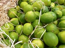Fresh greem limes sold at the market Royalty Free Stock Photography