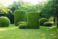 Fresh green Royalty Free Stock Photo