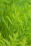 Fresh green. Stock Images