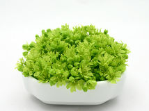 Fresh green Royalty Free Stock Photo