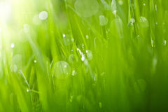 Fresh green abstract grass background Stock Photos