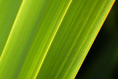 Fresh green abstract nature flax photos. Fresh green abstract flax backgrounds. Shallow depth of field Stock Image