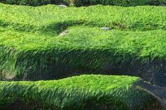 Fresh and green algae on a beach Stock Photos