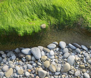 Fresh and green algae on a beach Stock Photography