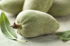 Fresh green almond Royalty Free Stock Photos