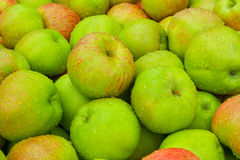 Fresh Green Apples. With morning dew on them Royalty Free Stock Photography