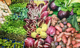 Fresh green aromatic herbs, roots, salad mangold, garlic, cabbage, onion, red cabbage, potatoes, chicory salad, radicchio salad, k Royalty Free Stock Photo