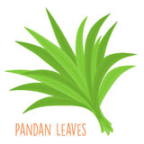 Fresh green aromatic pandanus leaf  Royalty Free Stock Photography
