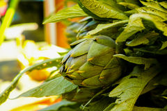 Fresh green artichokes flower heads with leaves ready to cook se Royalty Free Stock Photography